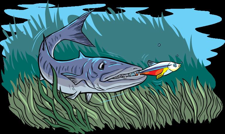 Fish being bitten