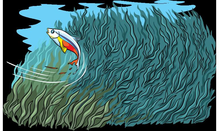 Fish escapes